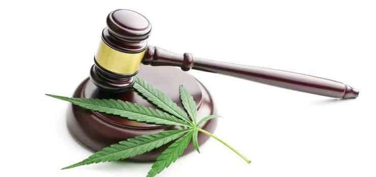 Geen raadsmeerderheid voor gedoogsteun medicinaal cannabisgebruik.